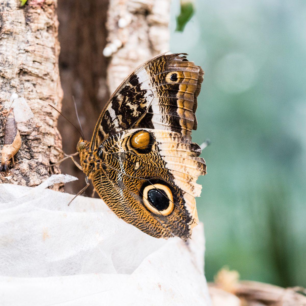 Botanic Garden Butterflies