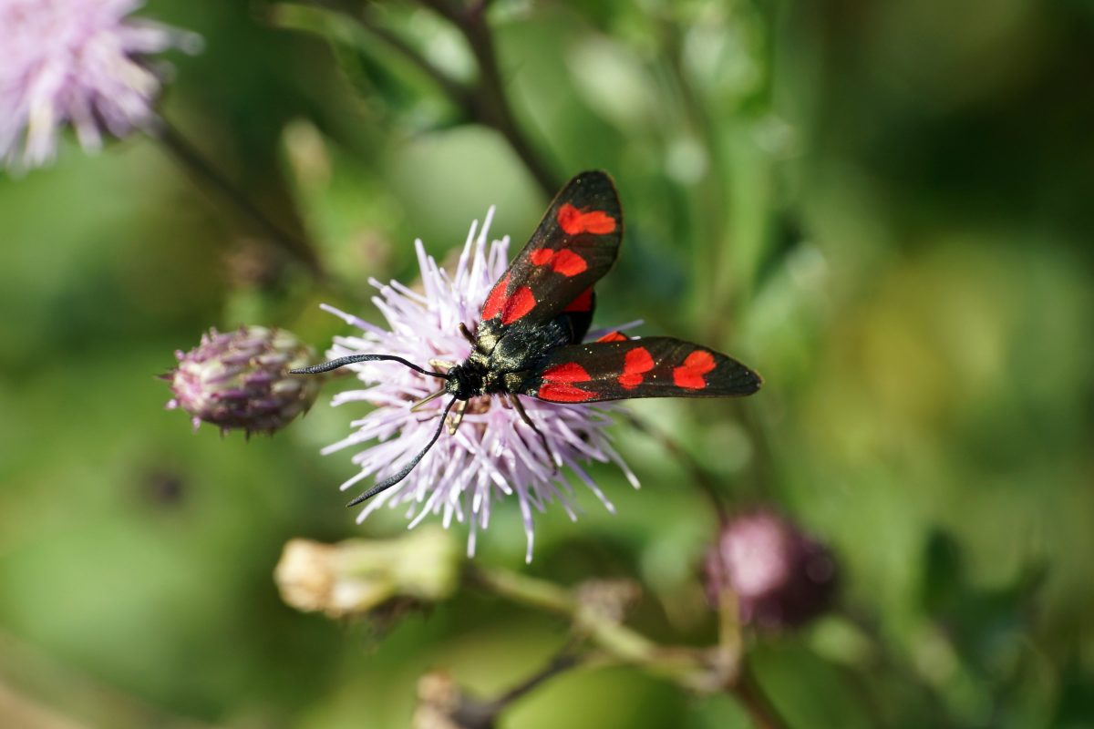 More Marumi Macro Moths